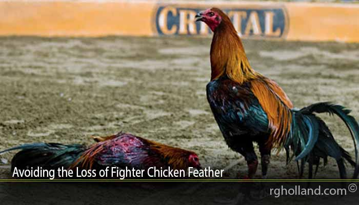 Avoiding the Loss of Fighter Chicken Feather